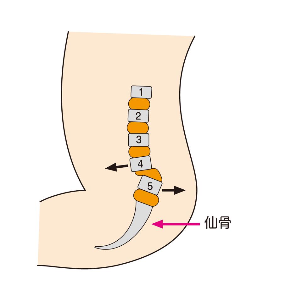 第4腰椎と第五腰椎と仙骨